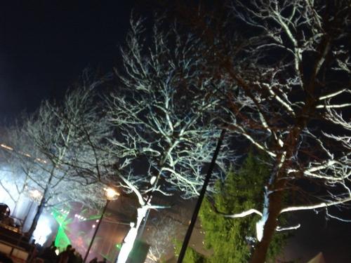 Bomen uitgelicht Koopmansplein