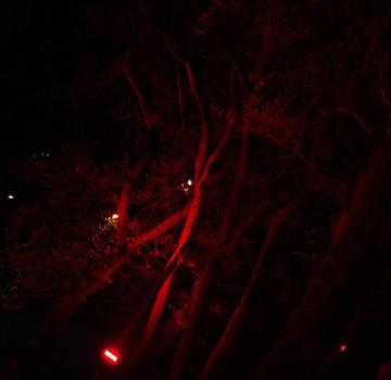 Uitlichten bomen in park Emmen