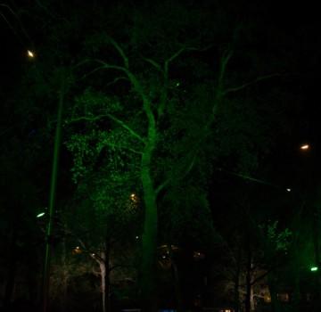 Bomen Uitlichten Emen
