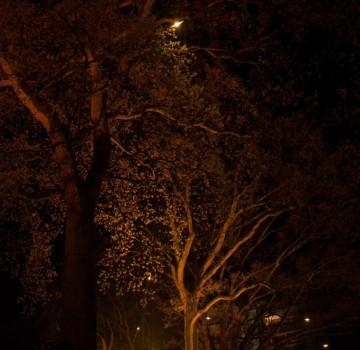 Bomen - Uitlichten - park -Emmen