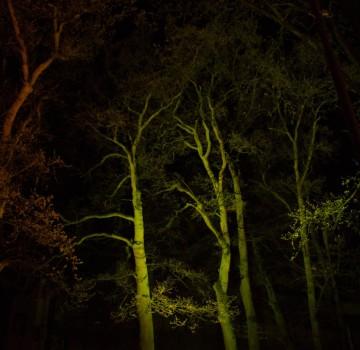 Bomen Uitlichten Emmen