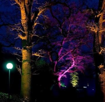 Park De Dommel Eindhoven Uitlichten Bomen Led Opening Paars